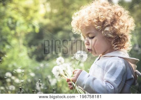 Cute curly child girl looking like dandelion blowing dandelion in summer park in sunny day with sunlight
