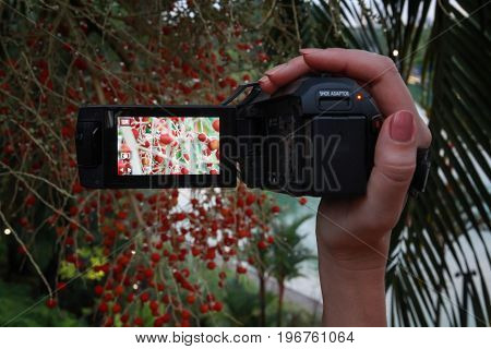 Video camera in woman hand works in the record mode outside. Shooting a nature.