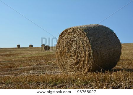 A Straw bales on harvested field with  many hay bales  in horizon  and blue sky