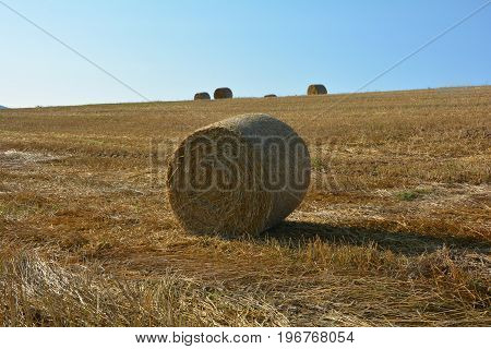 Straw bales on harvested field with  many hay bales  in horizon  and blue sky
