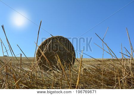 View from the ground on a straw bales with straws and sun