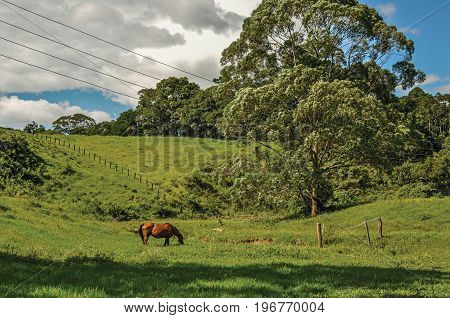 View of grassy fields with a horse grazing near the town of Joanópolis. In the countryside of São Paulo State, a region rich in agricultural and livestock products, southwestern Brazil