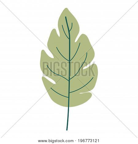 green light color of lobed leaf plant vector illustration