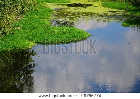 Summer Day Landscape With A Large Swamp Dotted With Green Duckweed And Marsh Vegetation