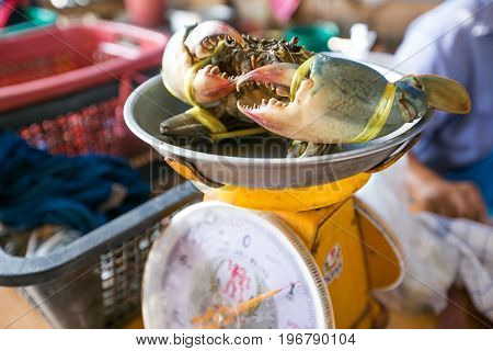 Fresh crab on kilogram scale in the market