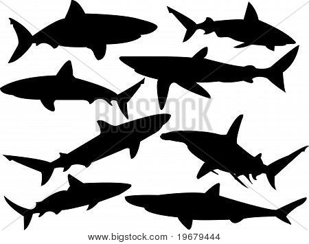 sharks collection
