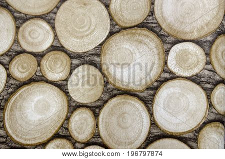 Round teak wood stump background. Tree stumps background. Ecologically clean floor or wall decoration of the tree stumps. Floor made with round log wood