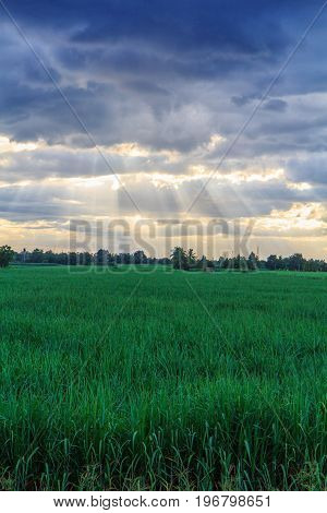 Sunbeam behind the cloud in evening at sugarcane