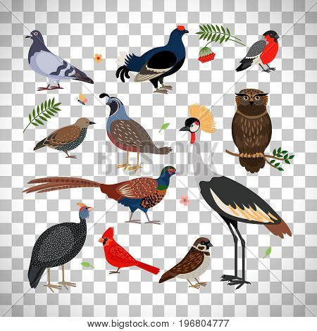 Vector bird icons. Owl and pheasant, bullfinch and crane isolated on transparent background