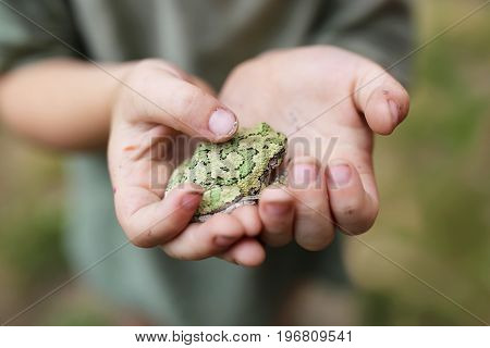 The dirty hands of a little boy who has been playing and exploring outside are gently holding a gray treefrog.