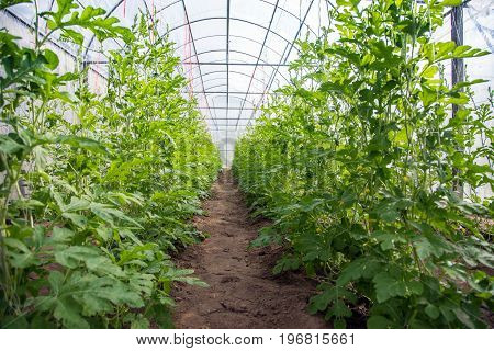 Close Garden For Lab To Gmo