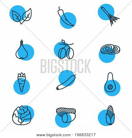 Editable Pack Of Cole, Peppermint, Tuber And Other Elements.  Vector Illustration Of 12 Vegetables Icons.