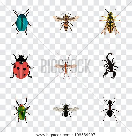 Realistic Bee, Ladybird, Wasp And Other Vector Elements