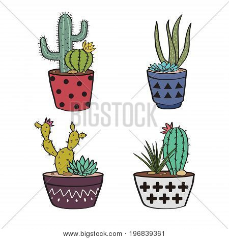 Vector Set With Colorful Cactuses And Succulents In Pots