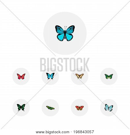 Realistic Azure Peacock, Beauty Fly, Birdwing And Other Vector Elements