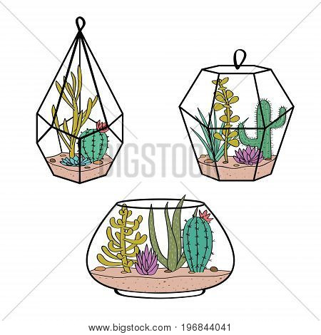 Vector Set With Colorful Cactuses And Succulents In Terrariums. Illustration With  Home Plants In Sc