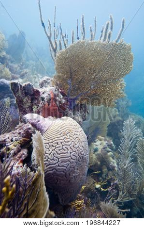 Variety Of Coral Formations
