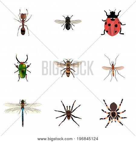 Realistic Damselfly, Midge, Tarantula And Other Vector Elements