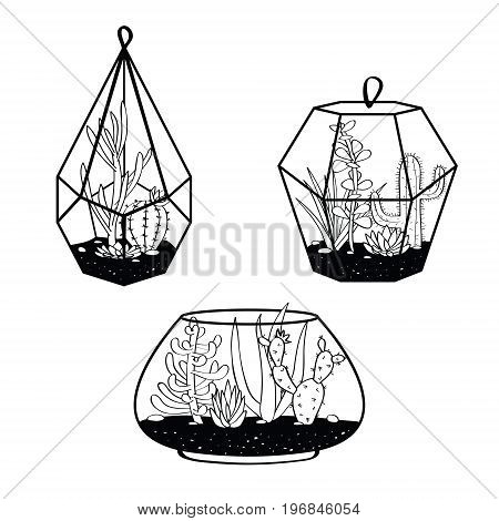 Vector Set With Black And White Cactuses And Succulents In Terrariums. Illustration With Home Plants