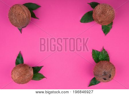 A composition of a group of fresh and hard coconuts on a bright pink background. Perfectly organized coconuts full of tasty vitamins with green leaves, top view. Summer, nature, freshness concept.