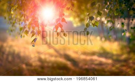 abstract nature Summer booked background sun blurred