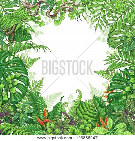 Hand drawn branches and leaves of tropical plants. Vivid square floral frame with red flowers and liana branches. Vector sketch. Space for text.