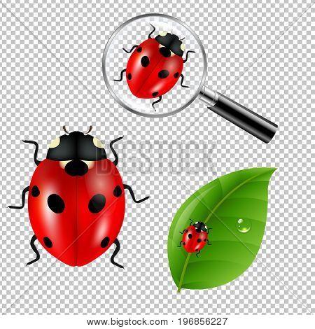 Ladybugs Set