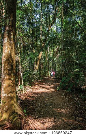 Itatiaia, Brazil - January 20, 2015. Trail with people in the middle of the forest in the Itatiaia Park, an altitude park, known for its animal diversity, trails and waterfalls. Rio de Janeiro State