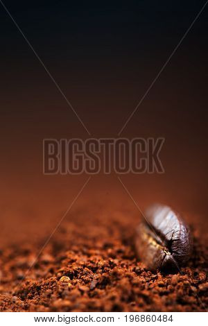 Roasted Coffee with Roasted Coffee Bean on dark chocolate color background copy space macro image. Espresso Texture close up
