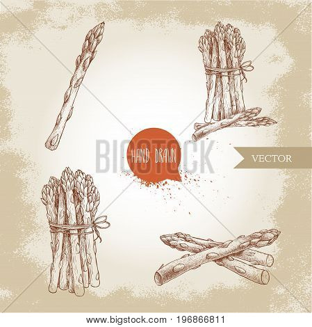 Hand drawn sketch style set of asparagus. Single bunch and composition. Organic food farm fresh vector illustration on vintage background.