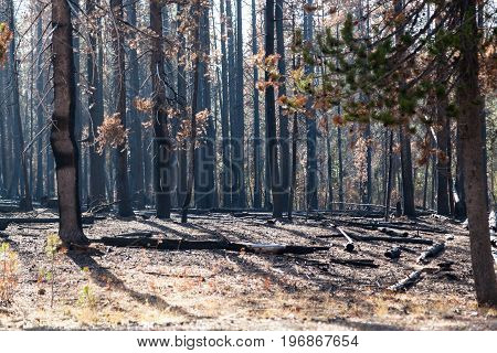 National Creek Complex Fire