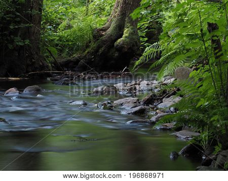 Long exposure magic forest stream with stones trees and fern
