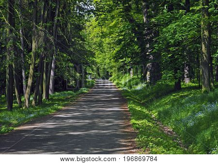 Road Path In The Spring Forest With Blooming Forget-me-not