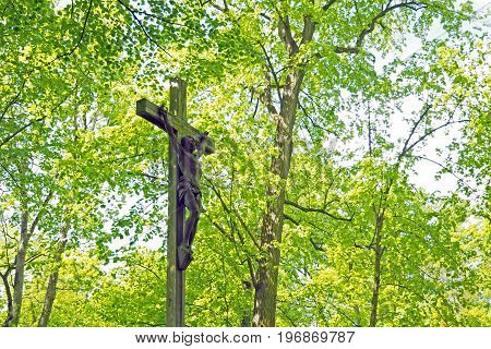Wooden Crucifix With Jesus In Hardwood Forest