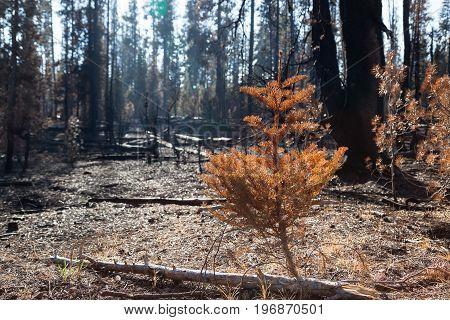 National Creek Complex Fire
