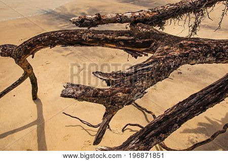Close-up of twisted twigs buried in the sand of Paraty Mirim, a tropical beach near Paraty, an amazing and historic town in the coast of the Rio de Janeiro State, southwestern Brazil.