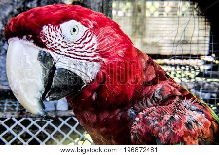 Bright Red Parrot eyes Nature feathers animals