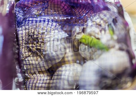 Garlic With Green Sprout Macro Closeup In Mesh Bag