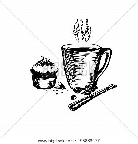 Hand Drawn Sketch of Coffee Cup with Delicious Cupcake and Cinnamon. Vintage Sketch. Great for Banner Label Poster