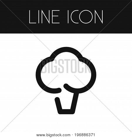 Broccoli Vector Element Can Be Used For Lettuce, Broccoli, Cabbage Design Concept.  Isolated Cabbage Outline.