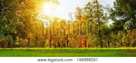 colorful autumn leaves on trees in park at sunset
