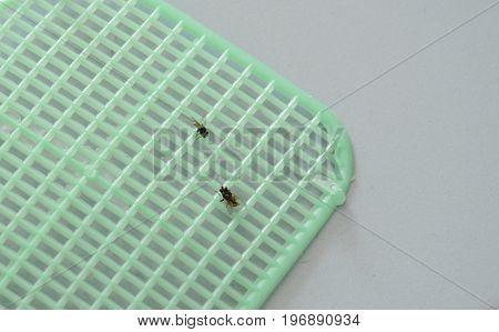flies got kills by plastic flapper on tile floor