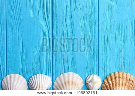 Row of seashells, blue background. Five scallops on wooden floor.