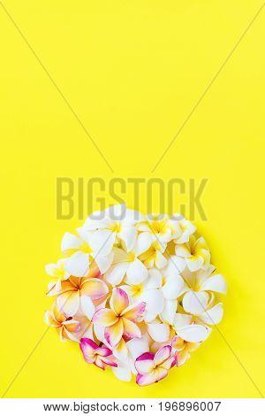 Group White Pink Frangipani Yellow Background