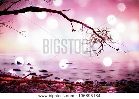 Film grain effect. Romantic morning. Bended tree above sea level boulders sticking out from smooth waves. Pink horizon with first hot sun rays.
