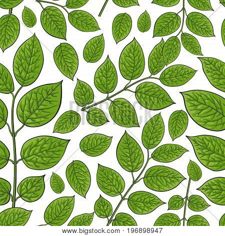 Seamless pattern of beautiful birch, honeysuckle leaves, twig, branches, sketch style vector illustration on white background. Hand drawn honeysuckle twig, birch leaves in seamless pattern