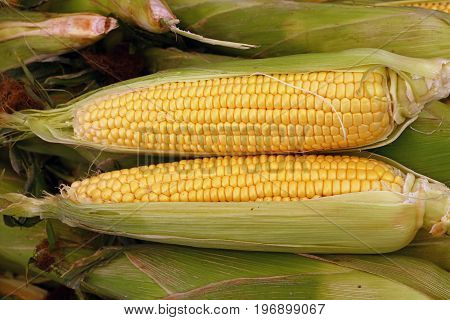 Two Peeled Fresh Corn Cobs With Green Leaves