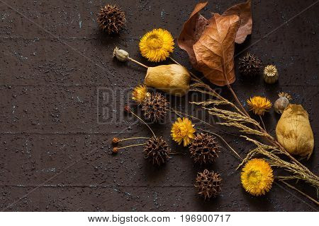 Autumn composition of dry leaves strawflower sweetgum and poppy capsules on brown textural background with copy space