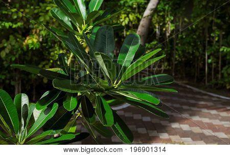 Green tropical plant in botanical garden