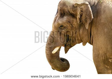 Image of the head of a large animal elephant in the zoo